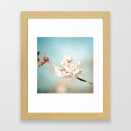 Pink Spring Cherry Blossoms Framed Art Print