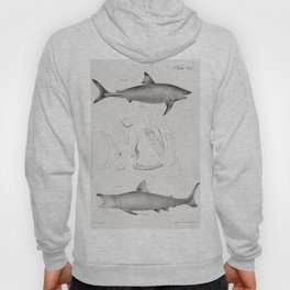 206  207 The Mackerel Porbeagle (Lamna punctata) 208 The Basking Shark (Selachus maximus)  from Zool Hoody