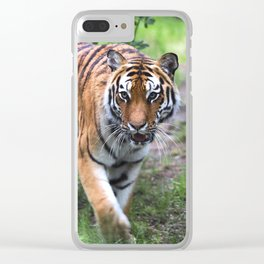 Tiger is walking in the woods Clear iPhone Case