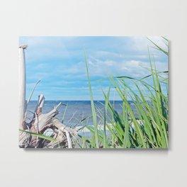 Through Grass and Driftwood Metal Print