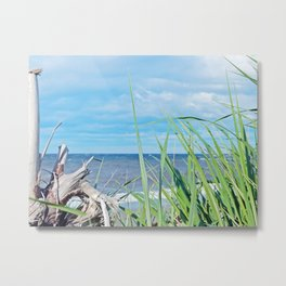 Through Grass and Driftwood Metal Print