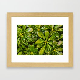 Top View Leaves Photo Framed Art Print