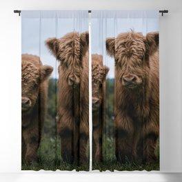Scottish Highland Cattle Calves - Babies playing II Blackout Curtain