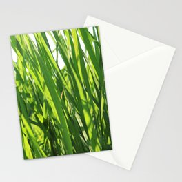 Large reeds leaves in a cane grove Stationery Cards