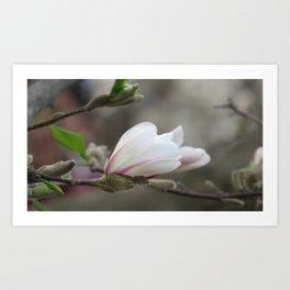 magnolia 03 Art Print