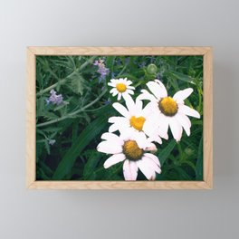 Daisies and Russian Sage Framed Mini Art Print