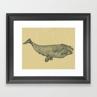 Northern Right Whale Framed Art Print