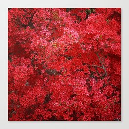 Charming Red Flower Canvas Print