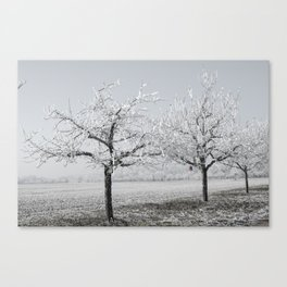 Winter Trees With Red Splash Canvas Print