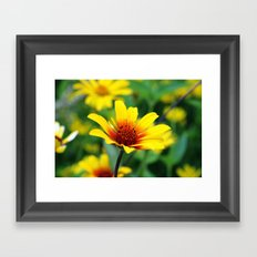 Prairie Flower Framed Art Print