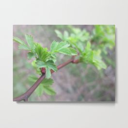 little leaf 4b Metal Print