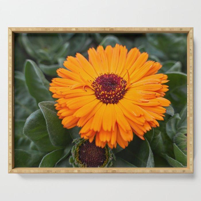 orange yellow gerbera daisy in the vase Serving Tray