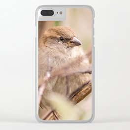 sparrow bird in the tress Clear iPhone Case