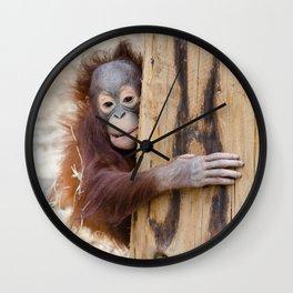 Baby Orang-utan Wall Clock