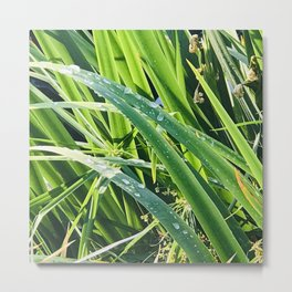Fresh Morning Dew Glistening on Elegant Grass Blades Metal Print