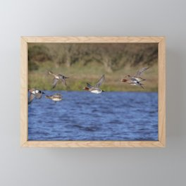 Wigeon Framed Mini Art Print
