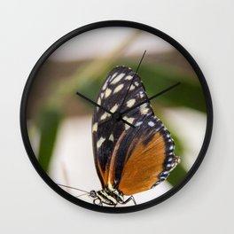 Buttefly at rest Wall Clock