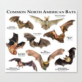 Common North American Bats Canvas Print