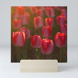 Tulips spring Mini Art Print
