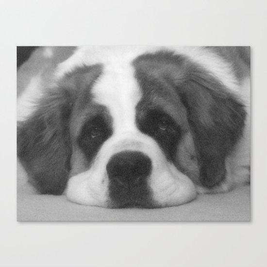 St. Bernard Portrait -- Black & White Canvas Print