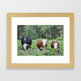 Three Cows Waiting Framed Art Print