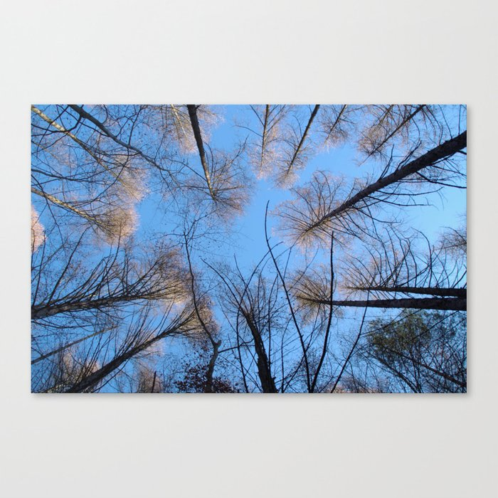 Glowing trees II Canvas Print