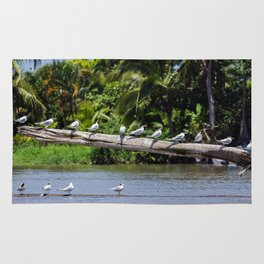Royal terns - Costa Rica Rug