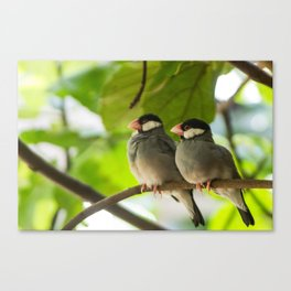 Birds Cuddling Canvas Print