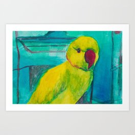 Bowie the Parrot Art Print