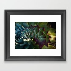 Siempreviva Framed Art Print