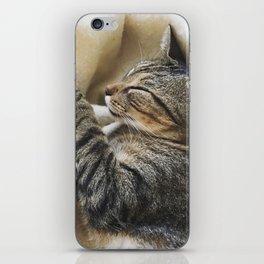 It's A Cat's Life iPhone Skin
