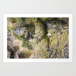 Eye Spy a Puffin Art Print
