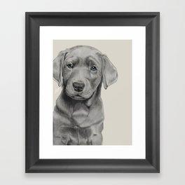 Silver Lab Framed Art Print