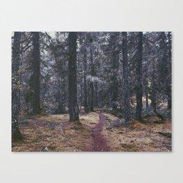 Enchanted Trail Canvas Print