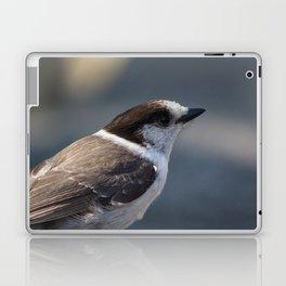 Gray Jay Portrait Laptop & iPad Skin