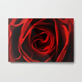 Rose Red 260 Metal Print