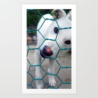 puppy Art Prints featuring Puppy by Elizabeth Chung