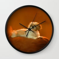shih tzu Wall Clocks featuring Shih Tzu by ThePhotoGuyDarren