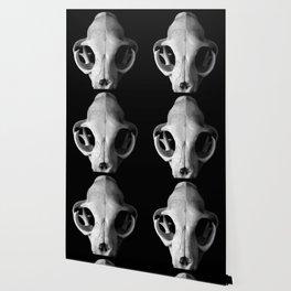 Cat Skull Wallpaper