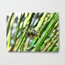 Summer Grass Seed Head Metal Print