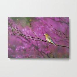 Bluebird and Redbuds Metal Print