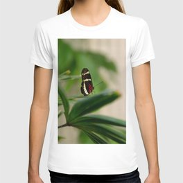 Doris Longwing Butterfly-1 T-shirt