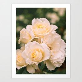 Lovely Moondance white roses are blooming Art Print