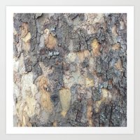 Abstracts in Nature Series -- Sycamore Bark Art Print