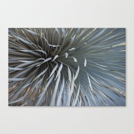 Growing grays Canvas Print