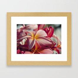 Pua Melia Ke Aloha Maui Hikina Framed Art Print