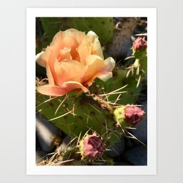 California Desert Bloom Art Print