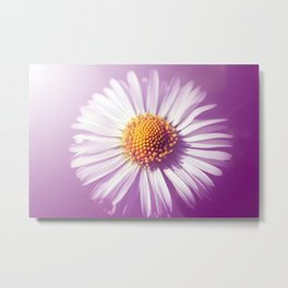Daisy softly Metal Print