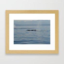 Humpbacks Framed Art Print