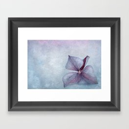 BLUE HYDRANGEA PETAL Framed Art Print